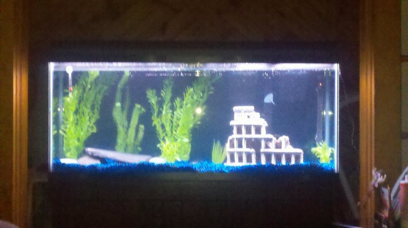 anyone out there a fish tank expert...-2011-02-28_19-38-57_606.jpg