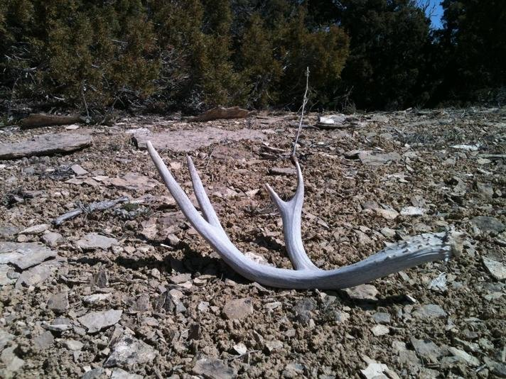 It's that time of year again!!! Show your Elk/Deer sheds-img_0445.jpg