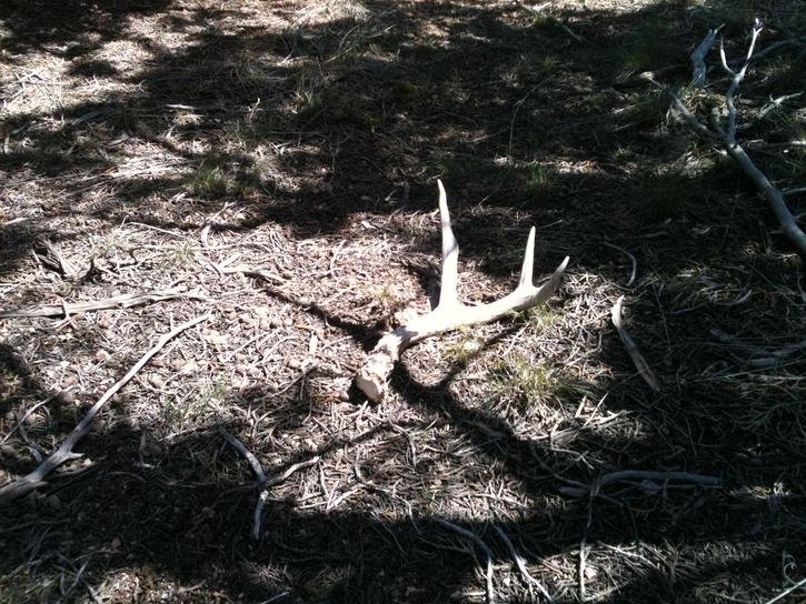 It's that time of year again!!! Show your Elk/Deer sheds-img_0449.jpg