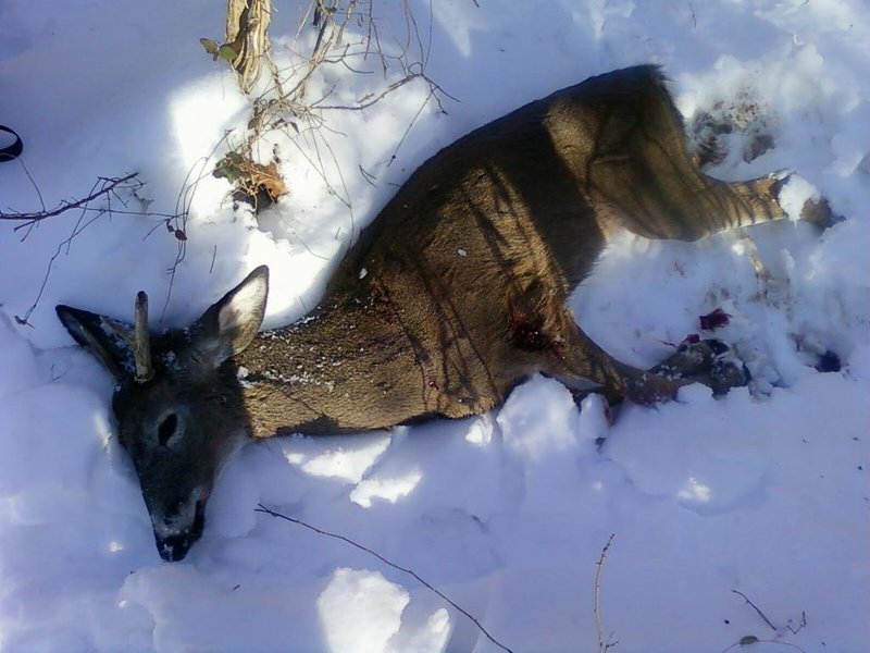 Let's see those hunting pics-pic_0063.jpg