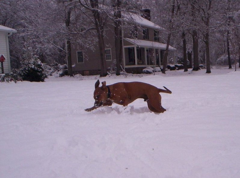 Prayers for my family please, had to put down my dog-snow-day-2010-030.jpg