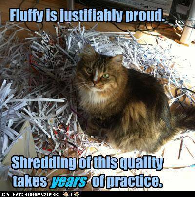 funny-pictures-fluffy-is-justifiably-proud-shredding-of-this-quality-takes-