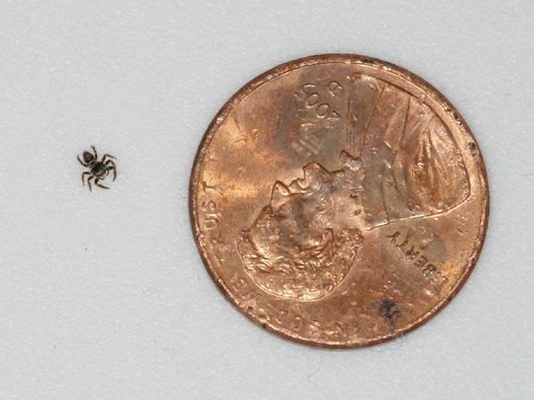 DSCF5444_tiny_spider_penny_sm