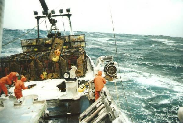 Opies in the Bering Sea