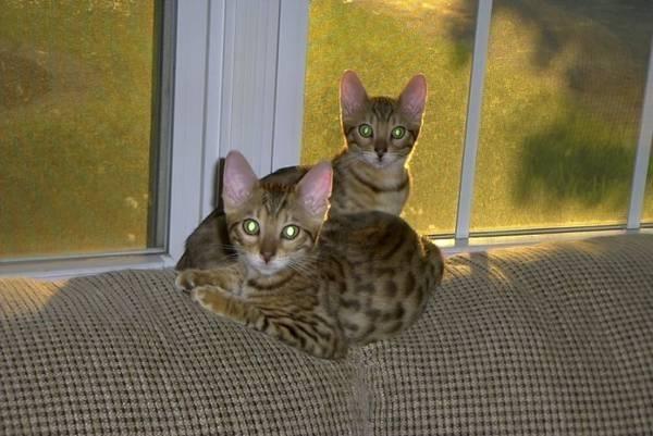 Leopard babies
