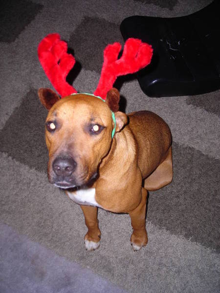 Bruce the reindeer