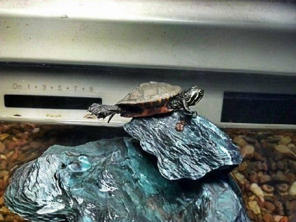 Leonardo planking