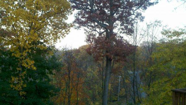 View from my deck, just about every fall color