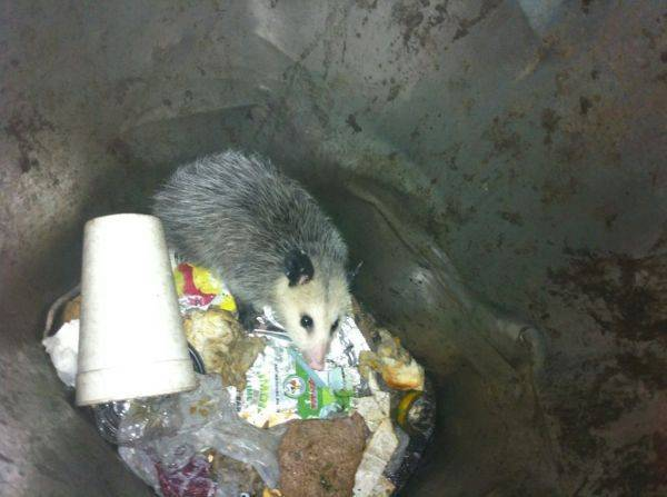 Found this guy in one of the trash cans at work