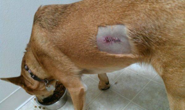 Poor pup. :(
