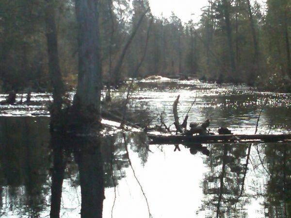 100 yard long beaver dam