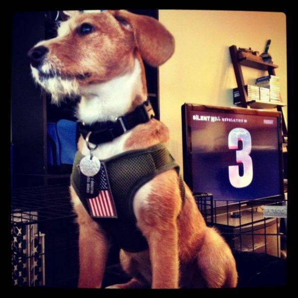 My proud pup.