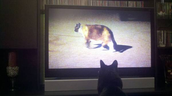 My cat approves of the new show on animal planet :)