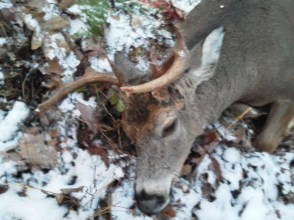 First buck!