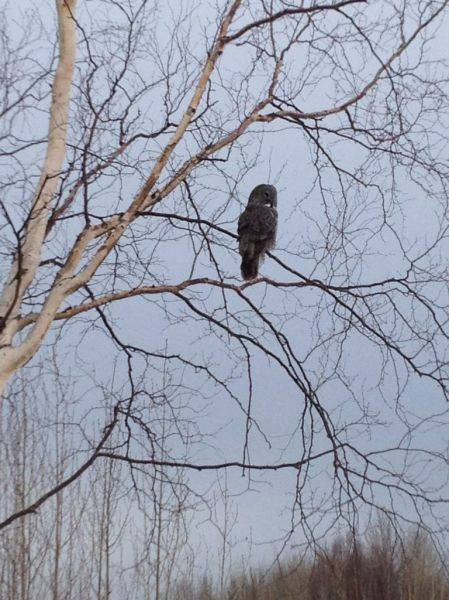 My son took this picture of an owl yesterday. Don't see these guys out