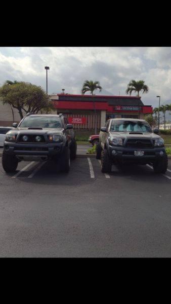 Maui spotted