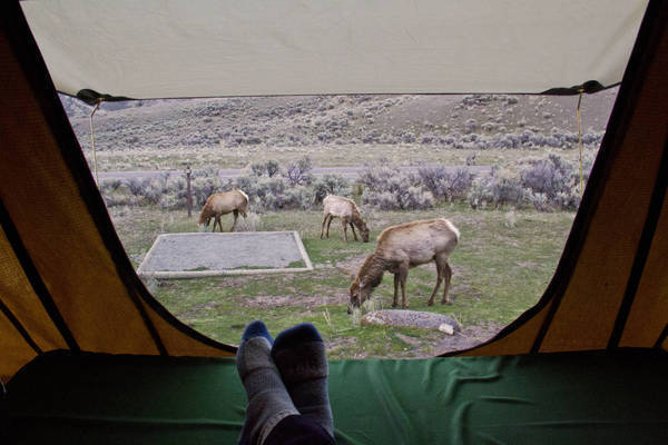 The only downside that Iu0027ve found so far is that animals donu0027t seem to realize youu0027re up there...and if you know my history with elk then you know why this ... & Cascadia Vehicle Tents Roof Top Tents | Tacoma World