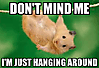 don-t-mind-me-i-m-just-hanging-around.png