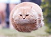 flying_kitty.png