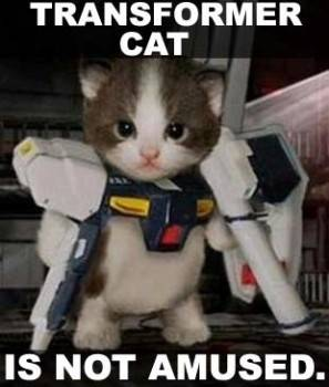 http://www.tacomaworld.com/gallery/data/500/transformer_not_amused_cat.jpg